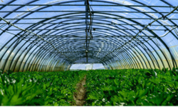 The substantial advantages of intelligent greenhouse control systems and traditional greenhouse cultivation?